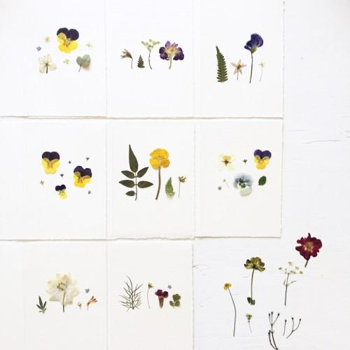 pressed-flower-cards-5-900